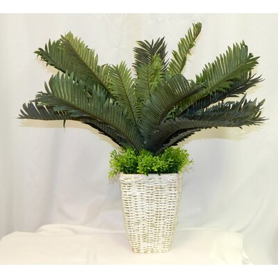 entracing palm tree type house plant. Mini Sago Floor Palm Plant in Basket Nearly Natural Silk Areca with Pot  Reviews Wayfair