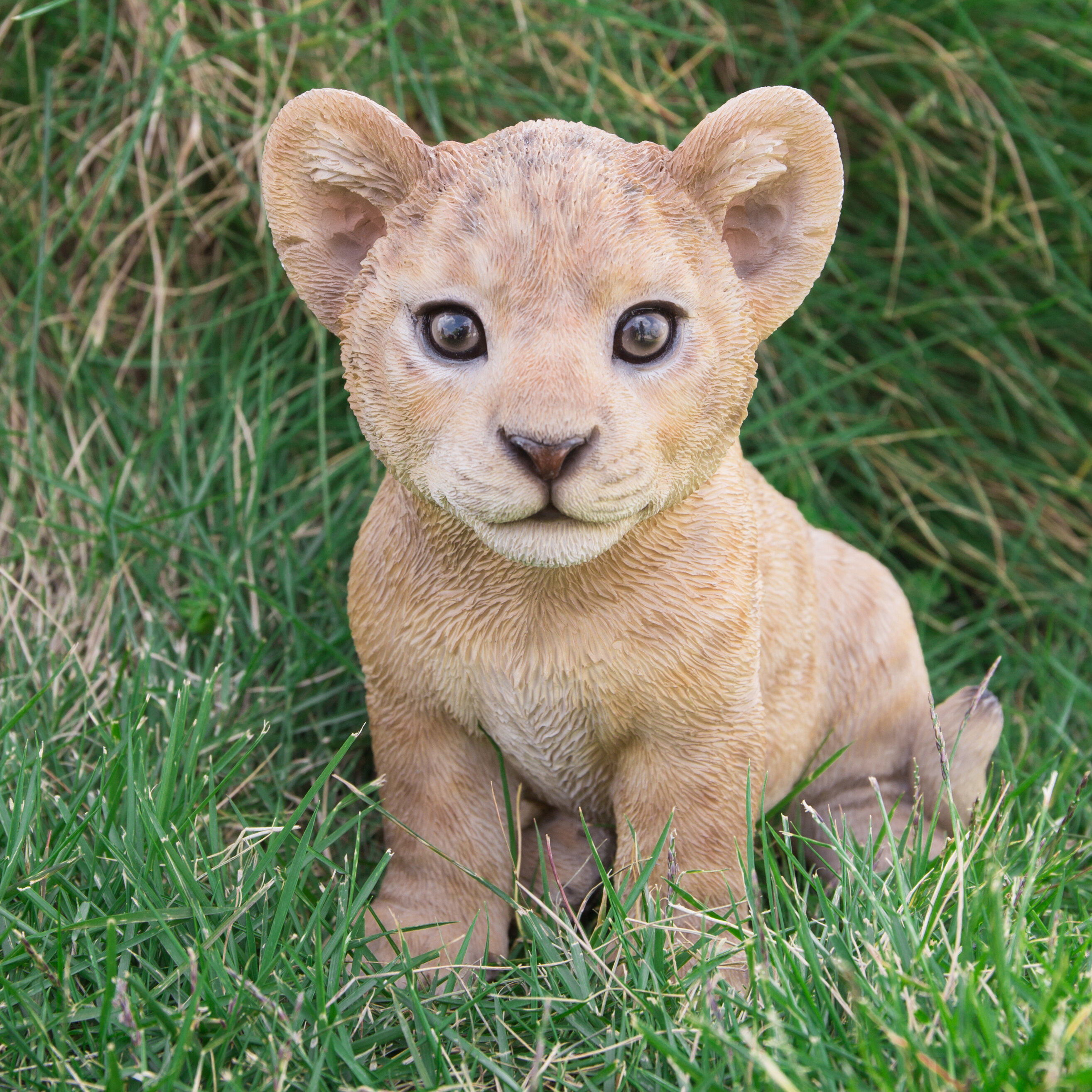 hi line gift ltd sitting lion cub statue reviews wayfair