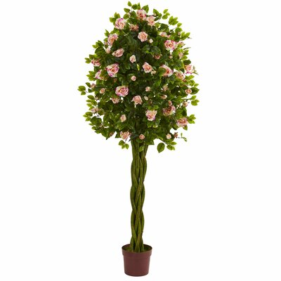 6' Rose Ficus Topiary with Woven Trunk August Grove