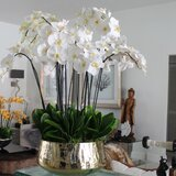 Phalaenopsis Orchids Floral Arrangement in Planter by Everly Quinn