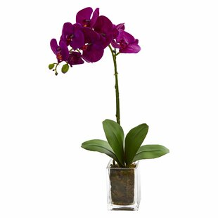 """1997 Square Potted Orchid 6/""""x24.5/"""""""
