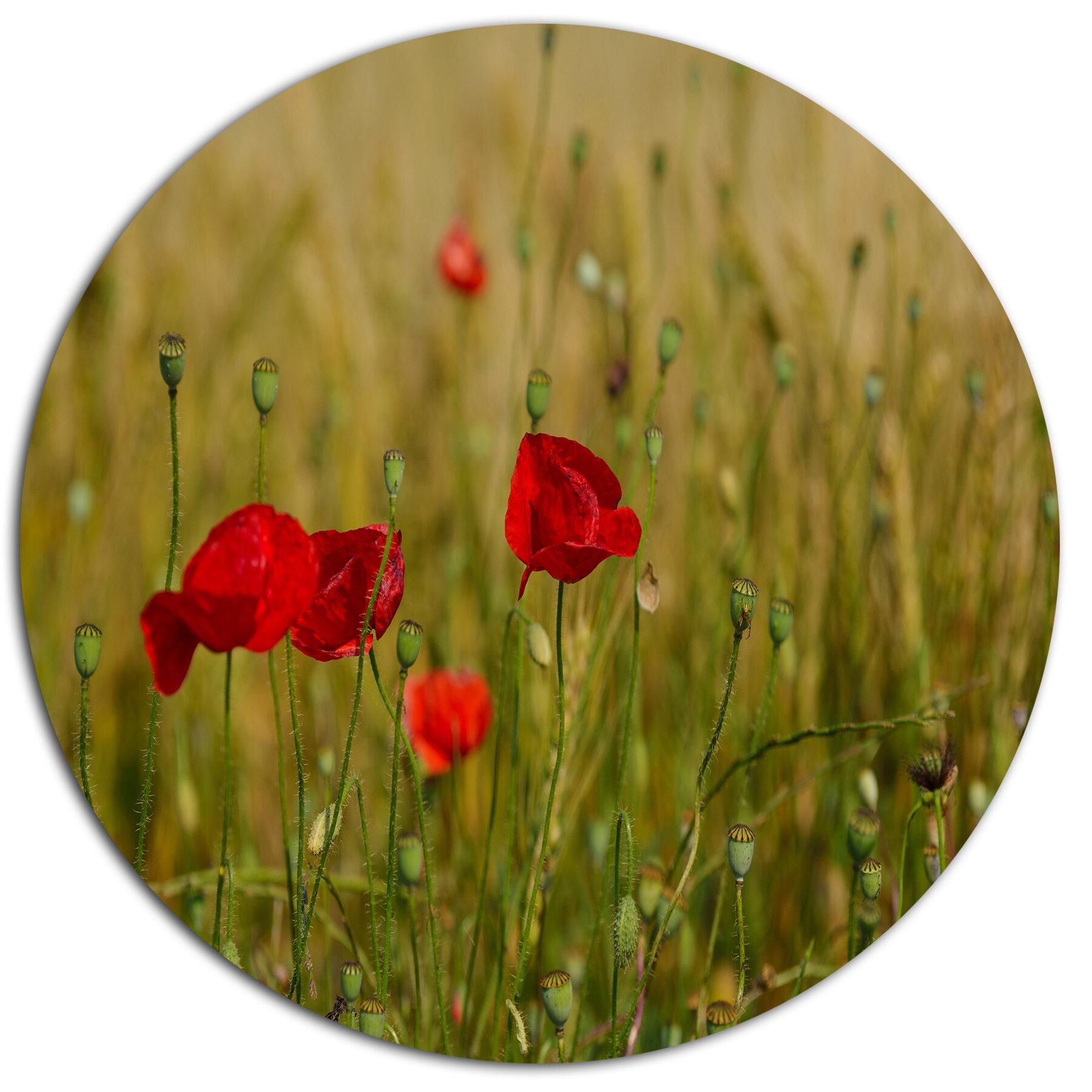 Designart Red Poppy Flower Field Background Photographic Print On Metal Wayfair