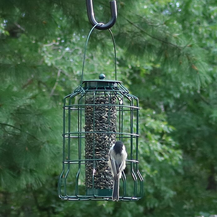 Augustin Wire Tube Bird Feeder