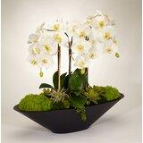 Orchid Floral Arrangement in Metal Pot