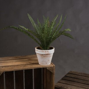 Floor Fern Plant In Pot By The Recipe Flowers