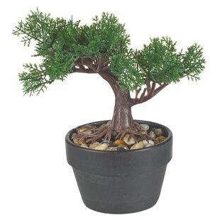 Artificial Bonsai Desktop Tree in Pot by World Menagerie