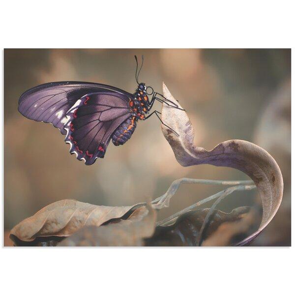 3d Butterfly Wall Art | Wayfair