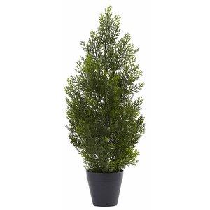 Mini Cedar Pine Tree in Pot
