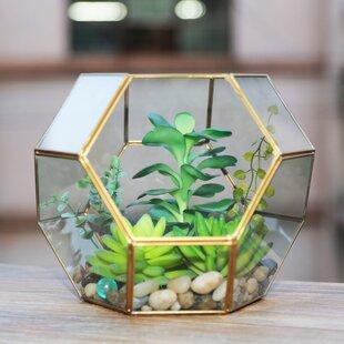 Critchfield Glass Terrarium By Fairmont Park