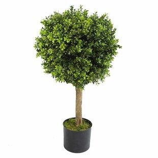 Topiary Bay Tree By The Seasonal Aisle
