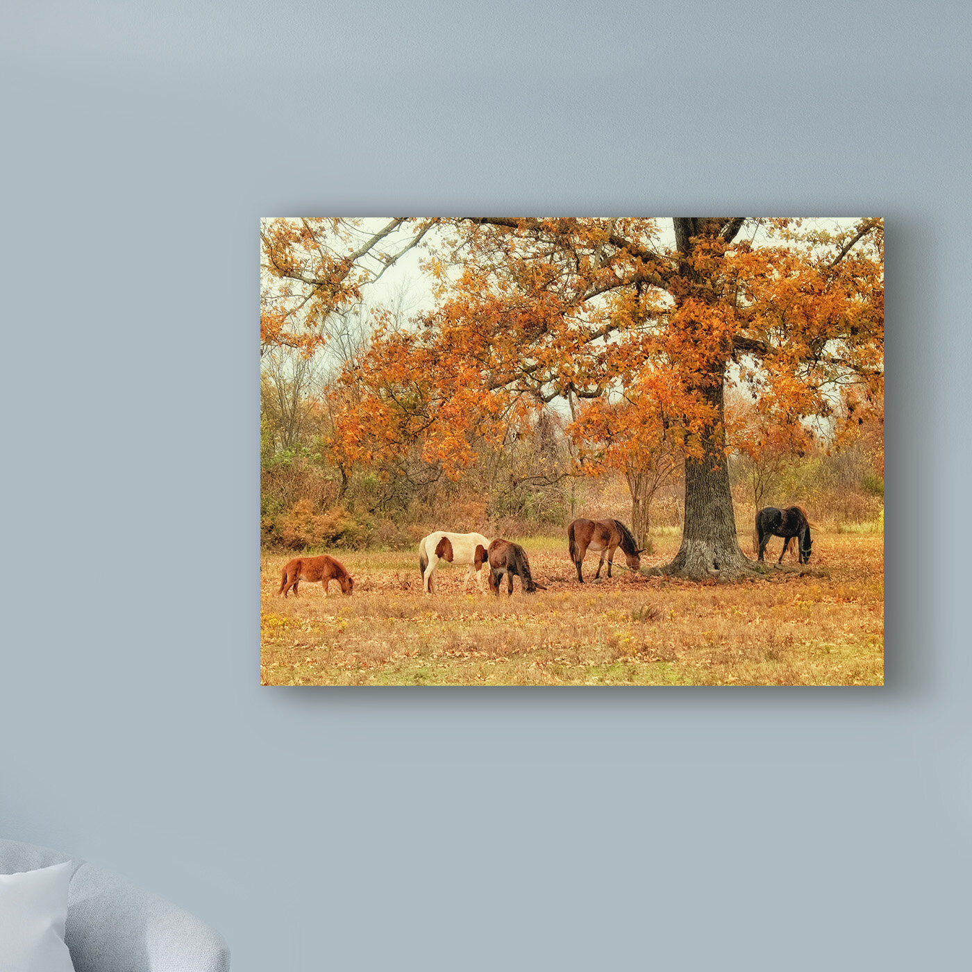 Calmly Grazing Photographic Print On Wrapped Canvas Birch Lane