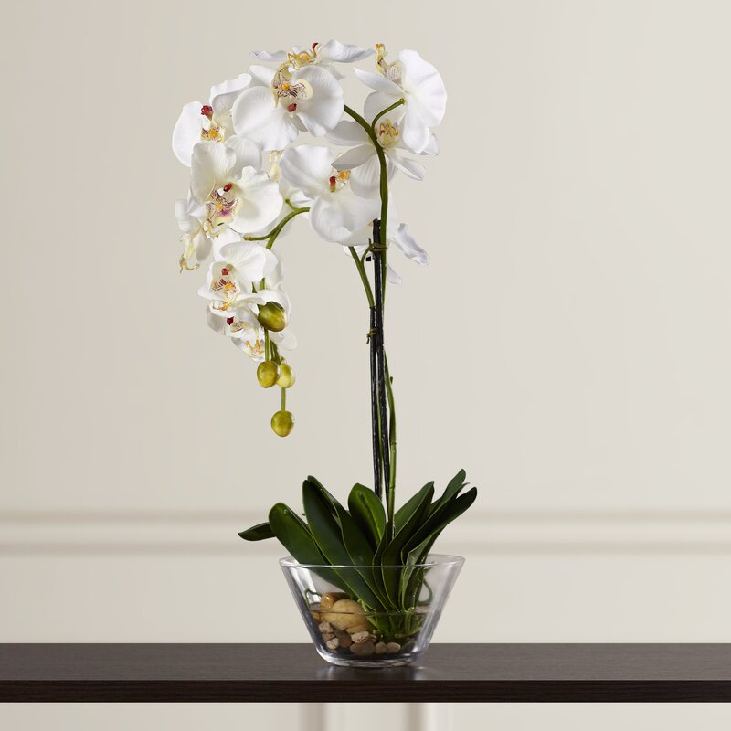 Three Posts Phalaenopsis Silk White Orchid In Glass Vase Reviews