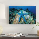 a-blue-starfish-clings-to-a-coral-reef-in-indonesia-photographic-print-on-canvas