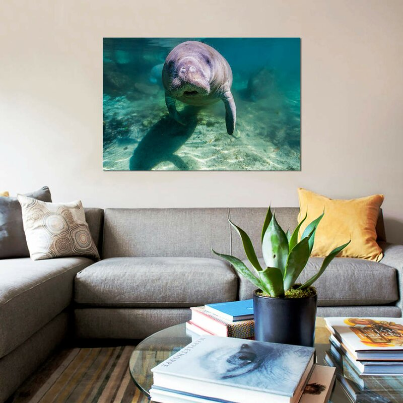U0027Manatee In Crystal River Floridau0027 Photographic Print On Canvas