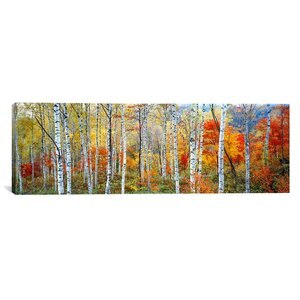 'Fall Trees, Shinhodaka, Gifu, Japan' Photographic Print on Canvas