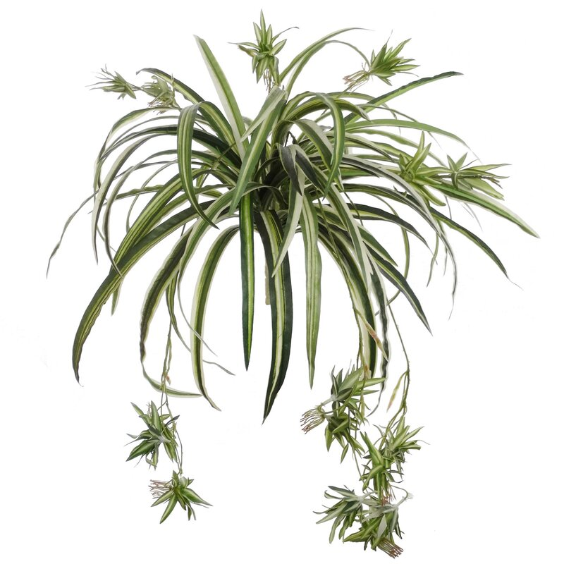 larksilk larpsilk spider plant reviews wayfair. Black Bedroom Furniture Sets. Home Design Ideas