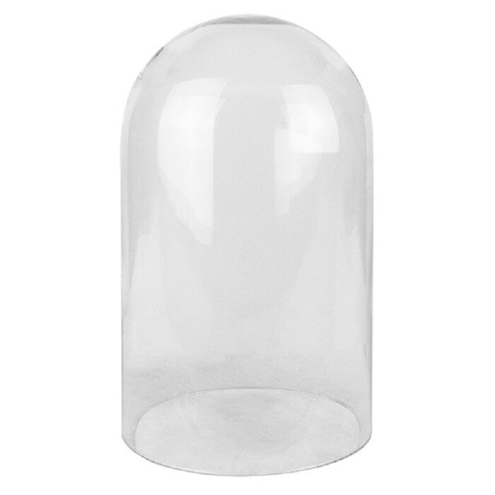 Alcott Hill Tindell Decorative Glass Dome Bell Jar With Wood Base