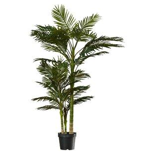 Brookings Floor Palm In Pot