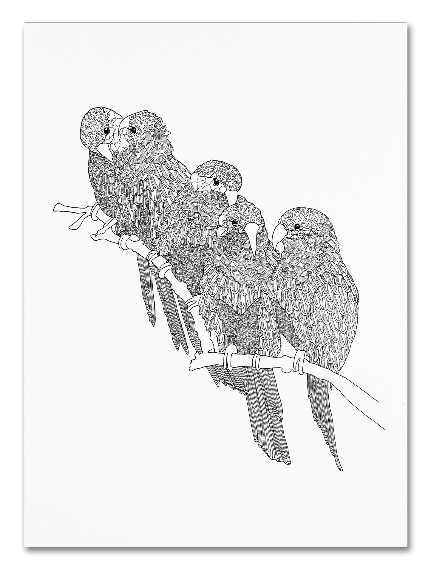 trademark art parrots drawing print on wrapped canvas wayfair 1970s Clothing