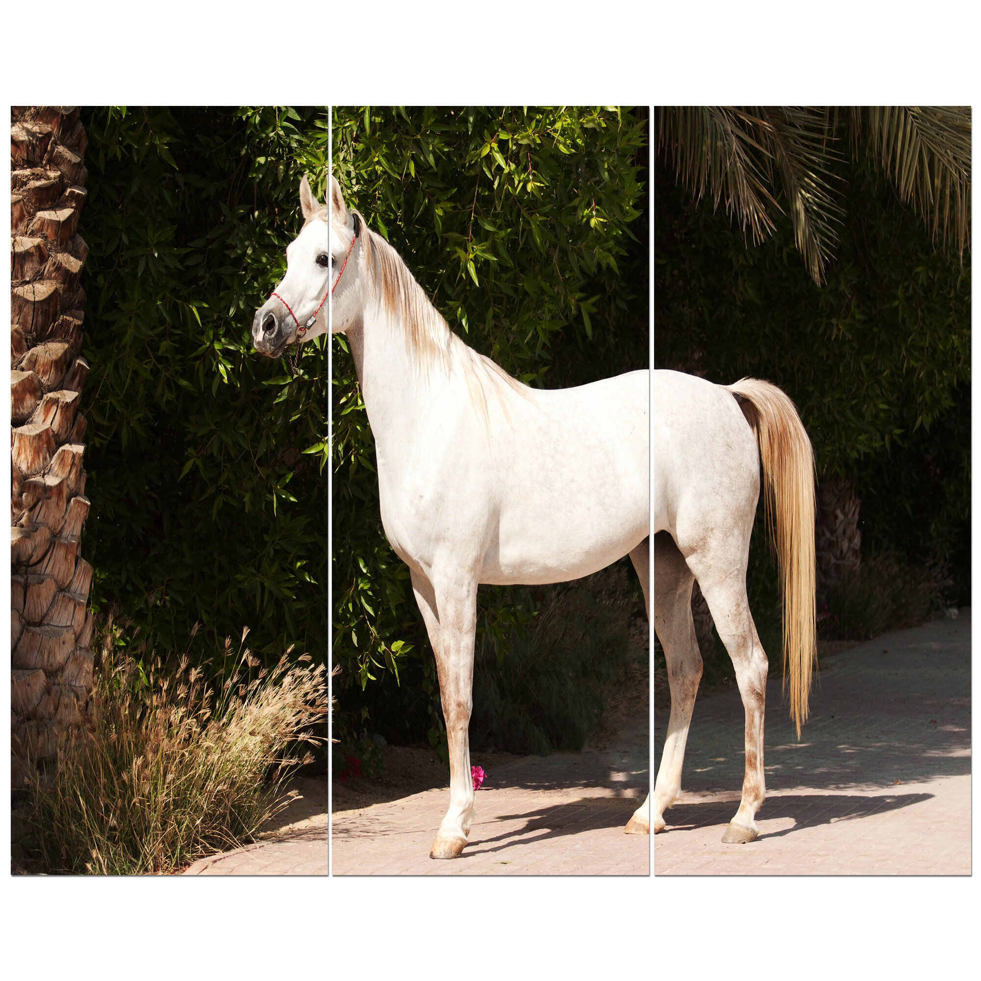East Urban Home White Arabian Horse Photographic Print Multi Piece Image On Wrapped Canvas