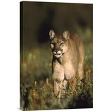 3D Rose A Cougar Walking Straight Towards You Towel 15 x 22