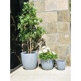 Vokolida 3 Piece Concrete Pot Planter Set