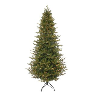 pre lit frasier fir artificial christmas tree with 500 clear lights - Frasier Christmas Tree