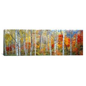 Panoramic Fall Trees Canvas Print
