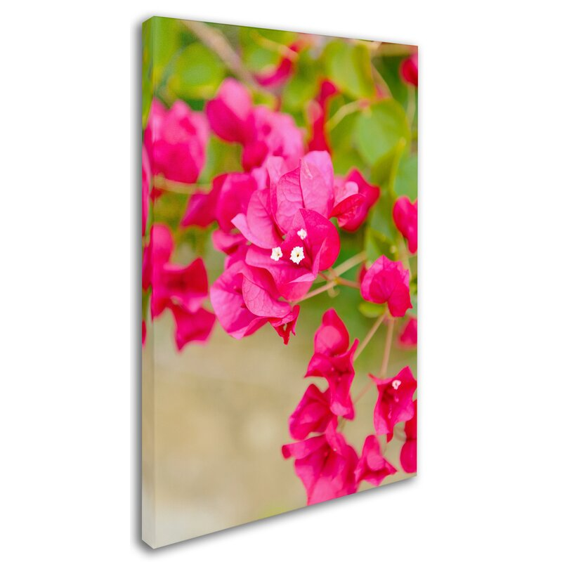 Trademark Art Bougainvillea By Ariane Moshayedi Photographic Print On Wrapped Canvas Wayfair