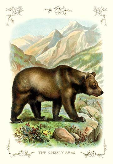 Buyenlarge The Grizzly Bear Graphic Art Wayfair
