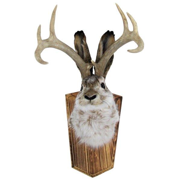 REAL COW SKULL HORNS home interior trophy Deer decor Elk Bison indian taxidermy