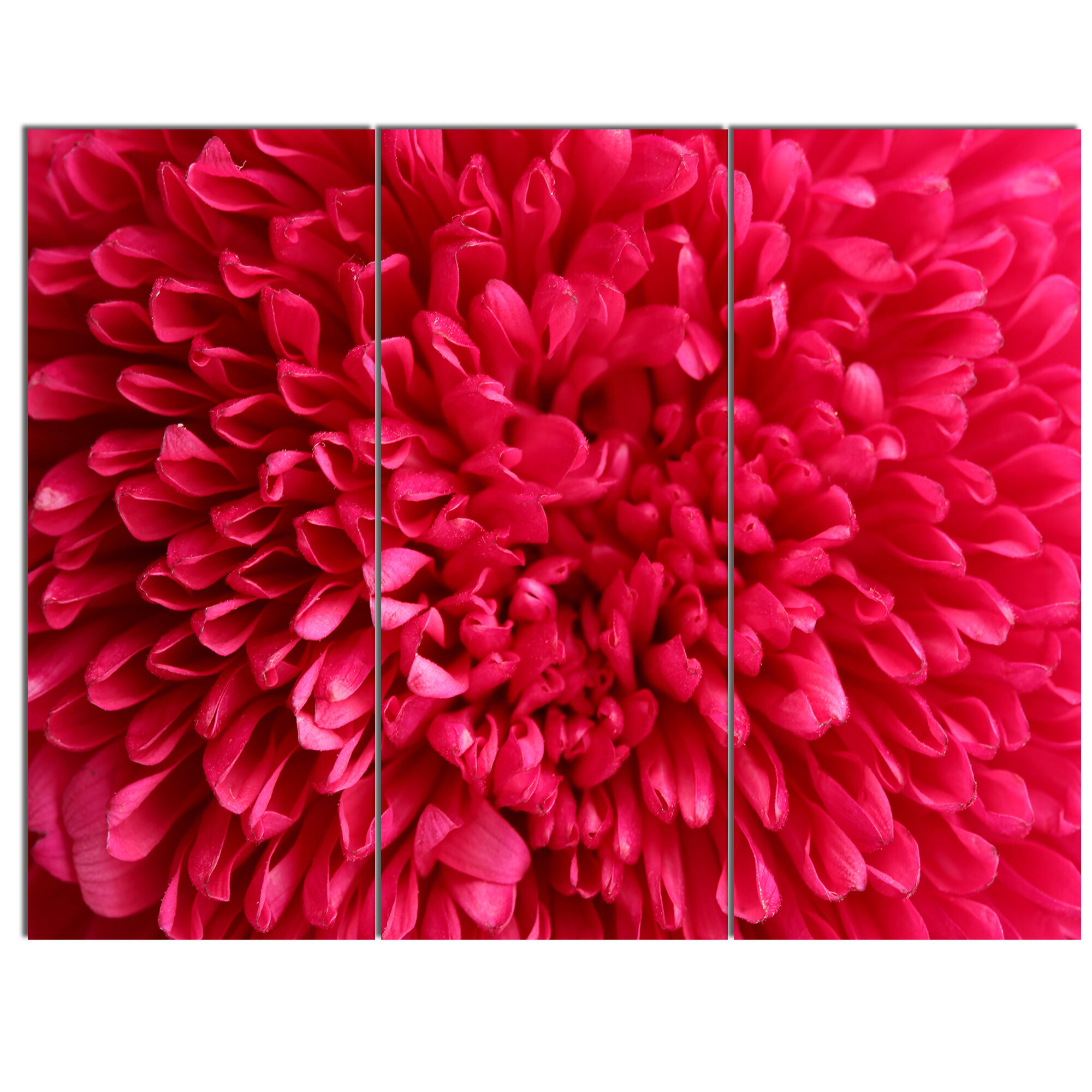 Designart Pink Aster Flower Petals Close Up 3 Piece Photographic