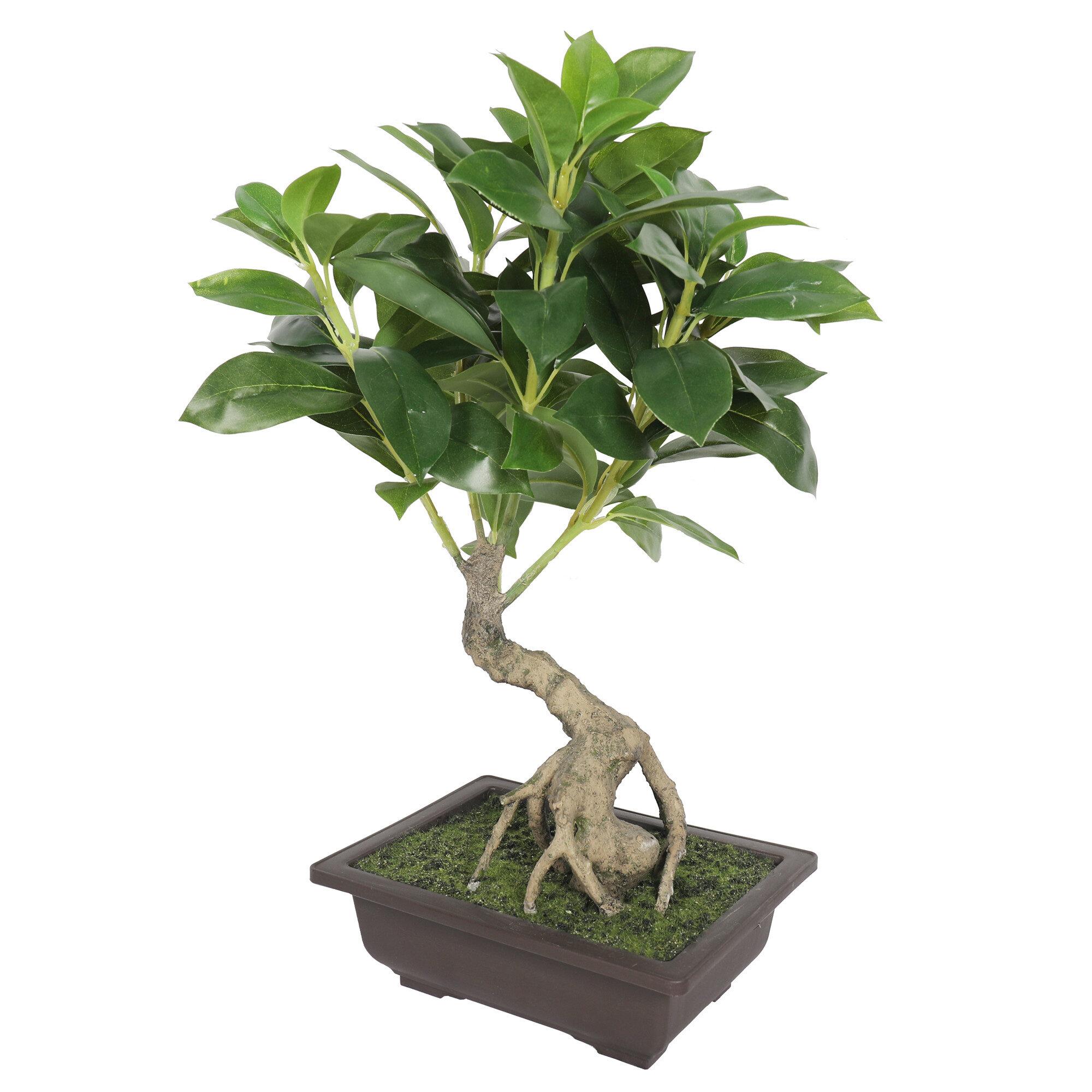 Bloomsbury Market 15 Artificial Bonsai Tree In Planter Reviews Wayfair