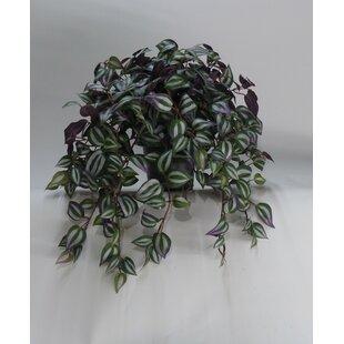 39cm Artificial Zebrins Plant In Pot Image