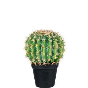 Floor Cactus Plant In Pot Image