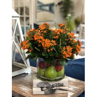 Kalanchoe Centerpiece in Pot