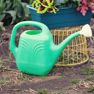 Aqua Rite 2 Gallon Watering Can Watering Cans Fun For House Plants on watering plants inside, sprinklers for house plants, accessories for house plants, watering plants with soda, self watering plants, watering can watering plants, leaves for house plants, sink hose for watering plants, water plants, watering globes for indoor plants, watering sticks for plants, vacation watering system for plants, bedroom decorating with plants, baskets for house plants, drip irrigation for house plants, hand watering plants, man watering plants, watering plants with milk jugs, metal watering can for plants,