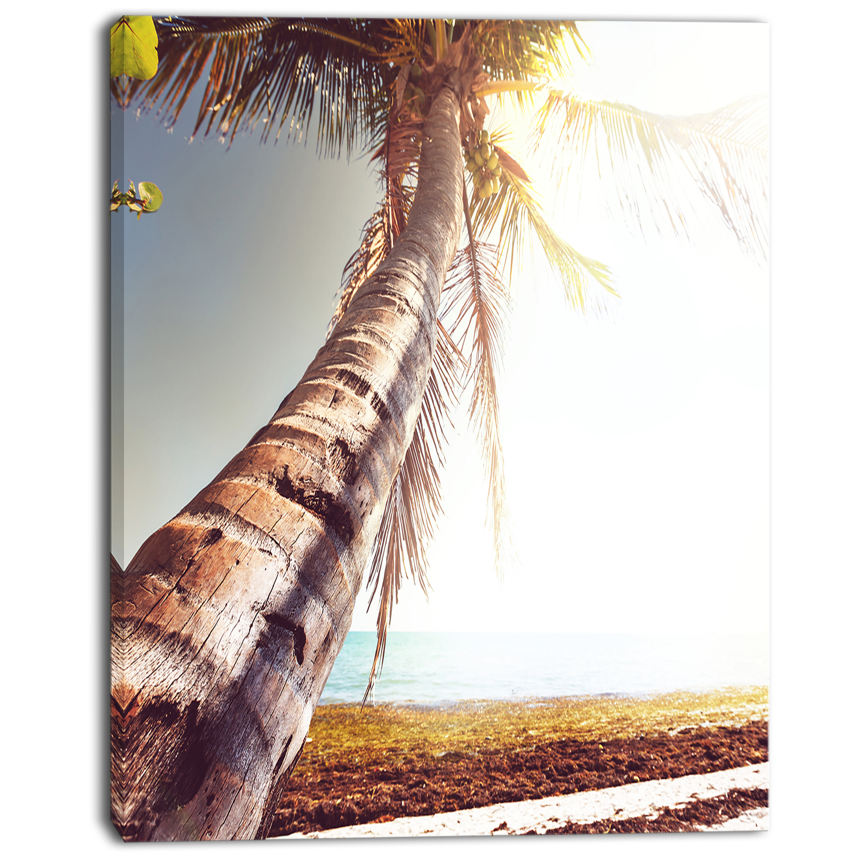 Designart Huge Bent Coconut Tree To Beach Photographic Print On Wrapped Canvas Wayfair
