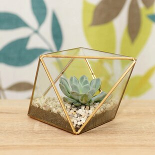 Crist Glass Terrarium By Fairmont Park