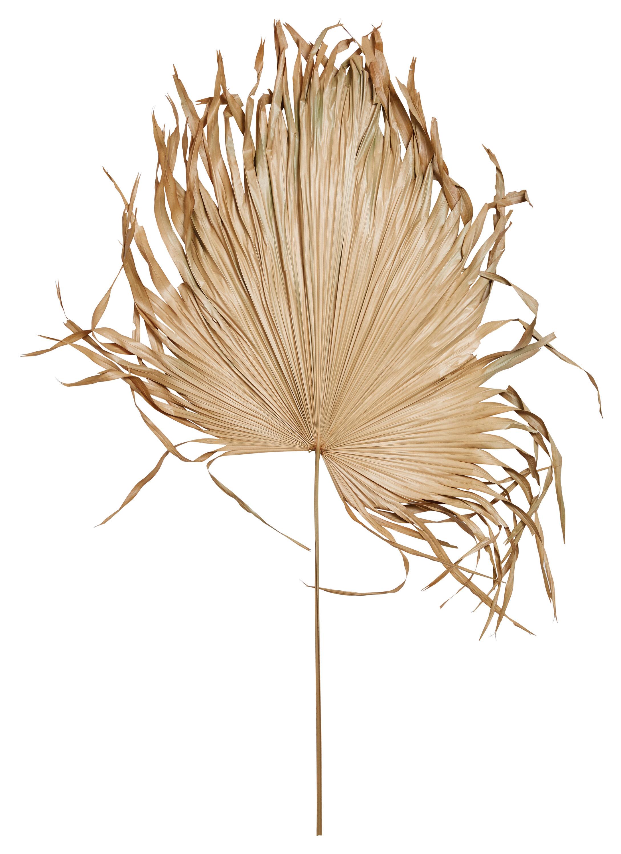 Bayou Breeze Dried Palm Fan Leaf Stem Wayfair