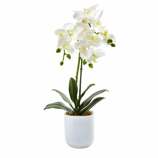 Phalaenopsis Orchid Floral Arrangements in Decorative Vase