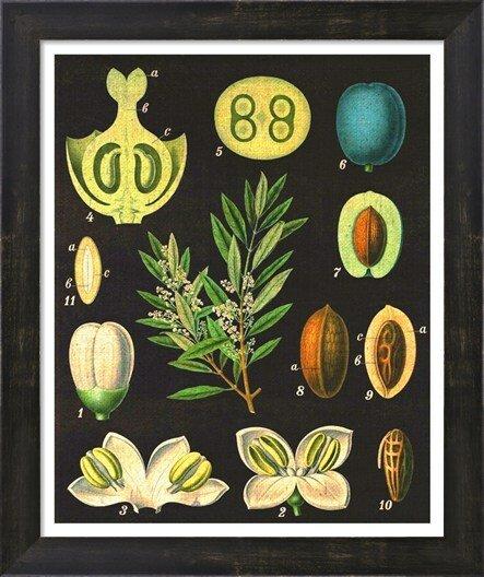 Evive Designs Vintage Olives By Evie Alessandria Framed Graphic Art Wayfair