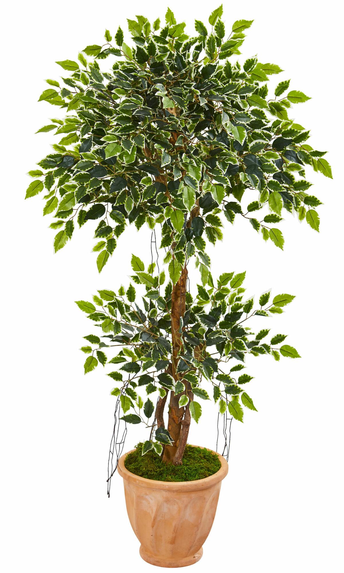 Charlton Home 53 Artificial Ficus Tree In Planter Wayfair