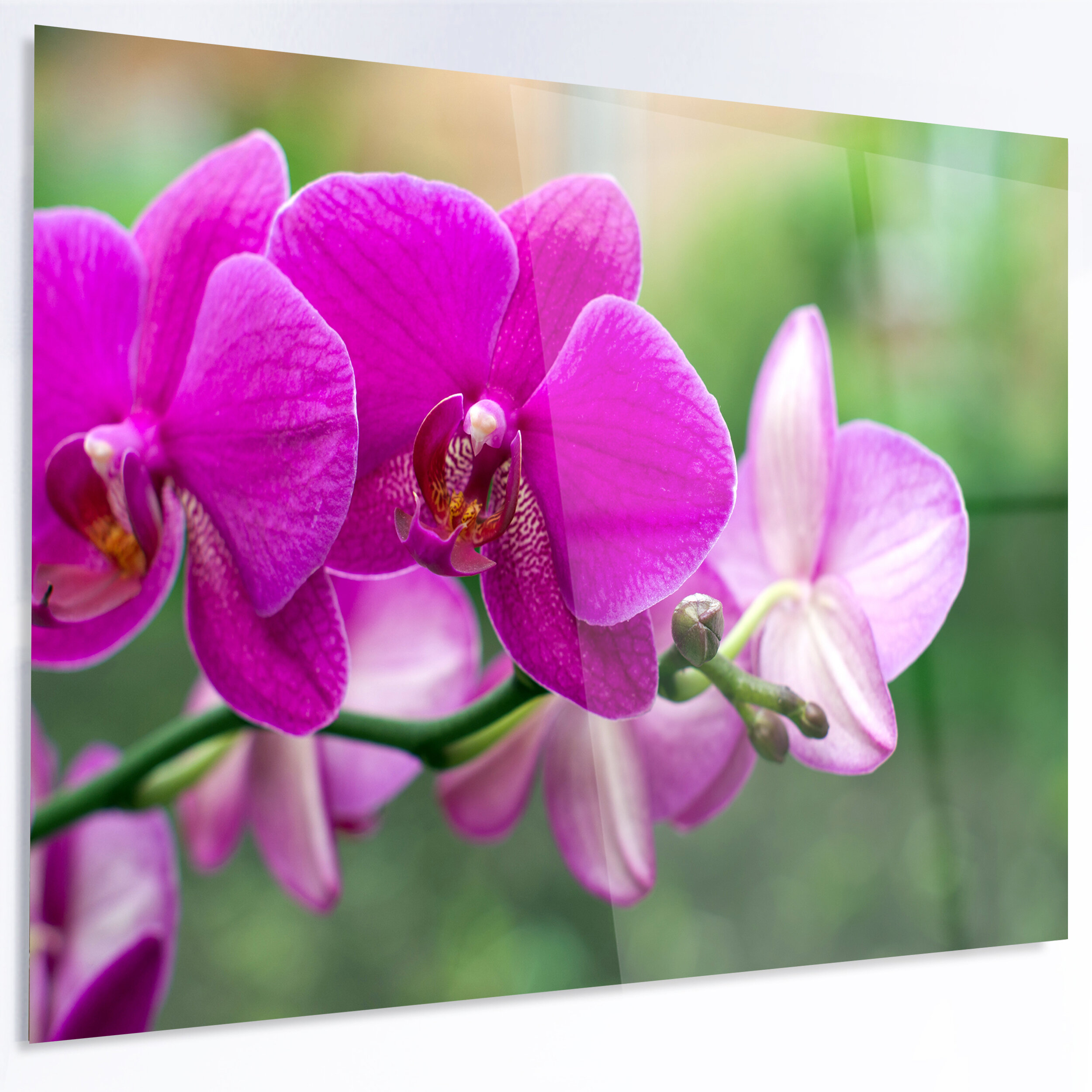 Designart beautiful orchid flowers on green photographic print on designart beautiful orchid flowers on green photographic print on metal wayfair izmirmasajfo