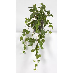 Hedra Hanging Plant in Pot by Wildon Home