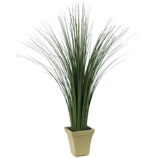 Tall Floor Grass In Pot