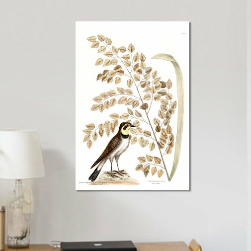 East Urban Home Catesby S Natural History Series Lark Seaside Oat Painting Print On Canvas Wayfair