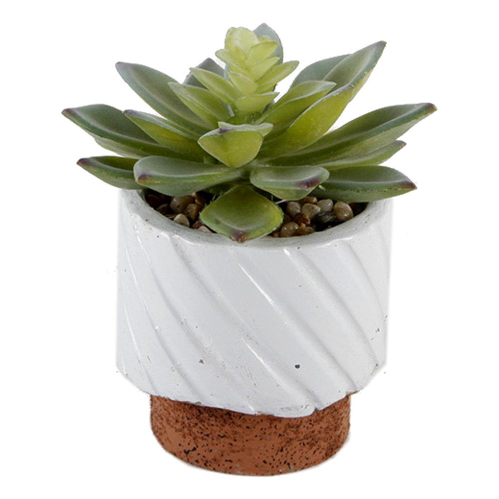 Wrought Studio 2 Piece Succulent Plant In Pot Reviews Wayfair