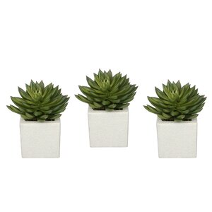 Artificial Pointed Echeveria Plant in Planter (Set of 3)