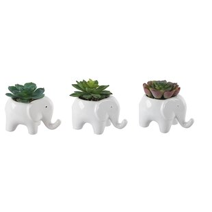 3 Piece Succulent Plant in Decorative Vase Set